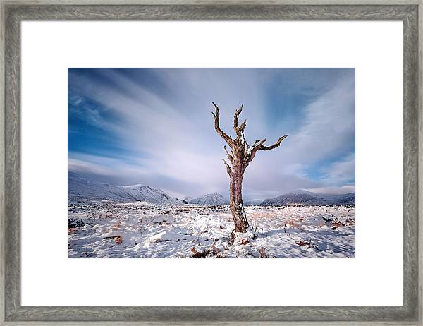 Lone Tree In The Snow Framed Print
