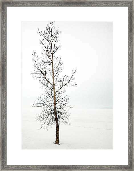 Lone Tree On The Ottawa River Shoreline Framed Print