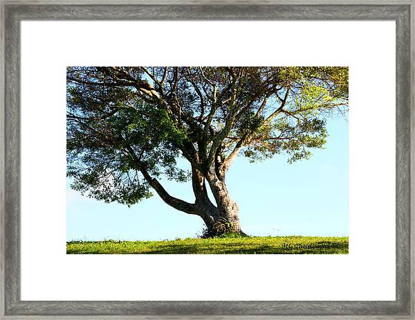 The Lone Tree Original Framed Print