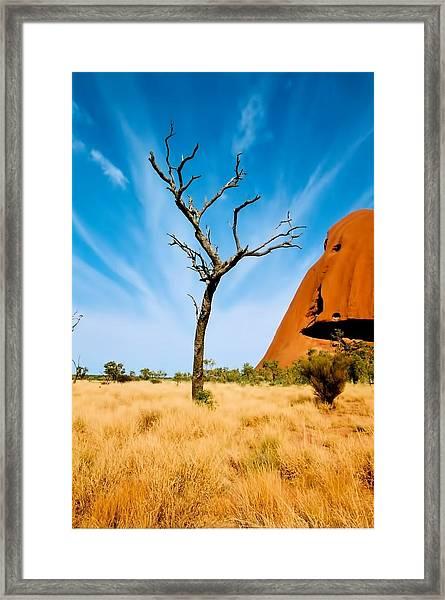 Lone Tree Uluru Framed Print