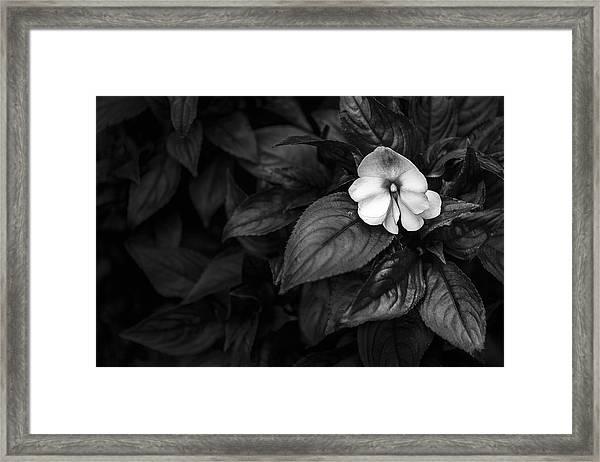 Lonely 1 Framed Print