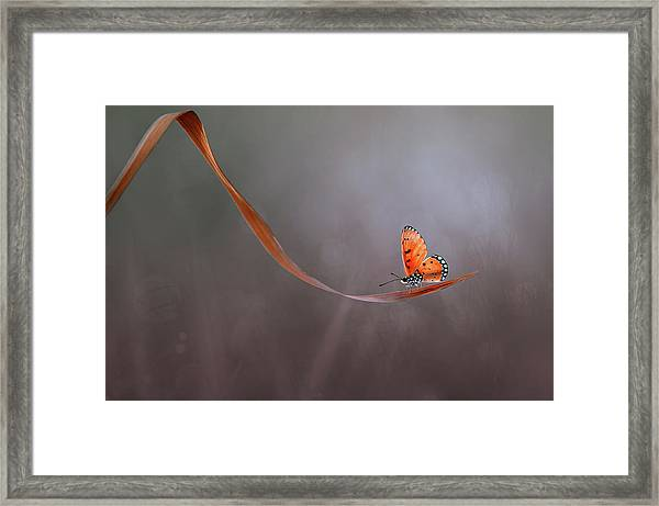 Lonely Framed Print by Edy Pamungkas