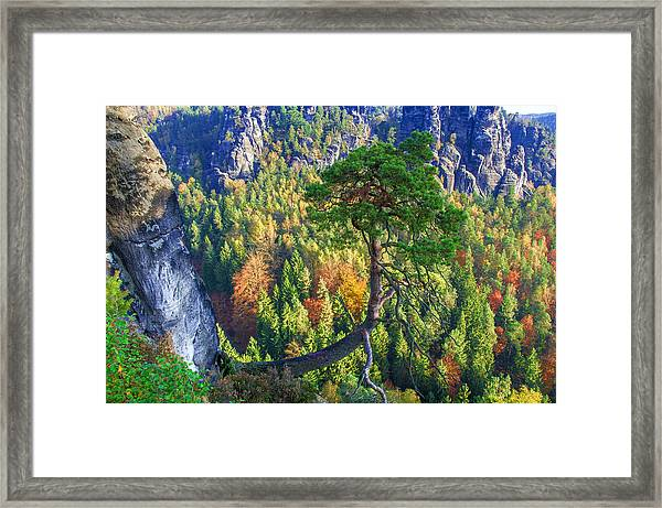 Lonely Tree In The Elbe Sandstone Mountains Framed Print