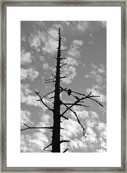 Lonely Vulture Framed Print