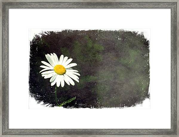 Lonesome Daisy Framed Print