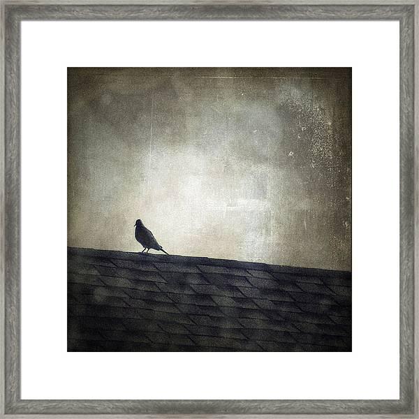 Lonesome Dove Framed Print