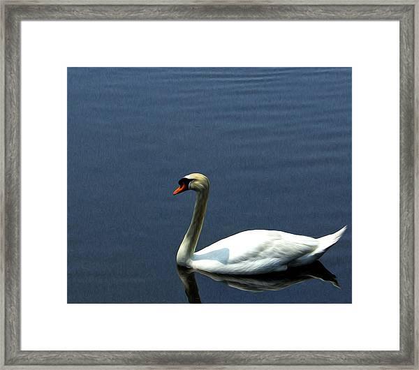 Lonesome Swan Framed Print