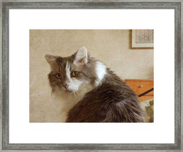Long-haired Cat Portrait Framed Print