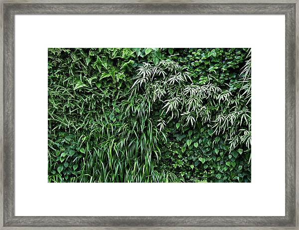 Longwood Gardens Framed Print