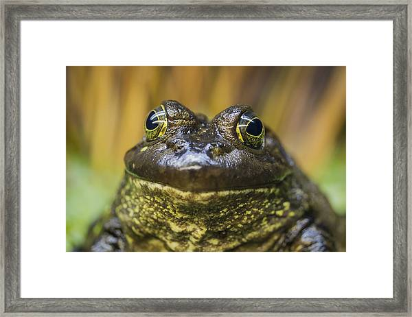 Look Into My Eyes Framed Print