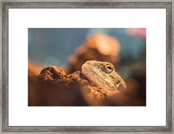 Looking At You Framed Print