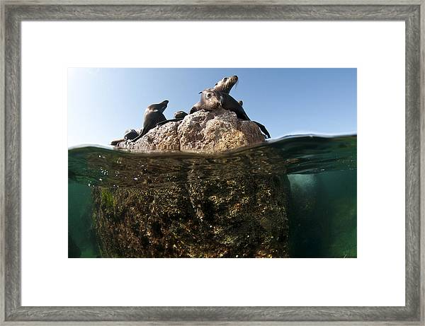 Looking At You Framed Print by David Valencia