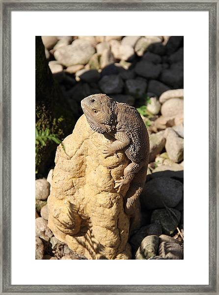 Framed Print featuring the photograph Looking For Lunch by Debbie Cundy
