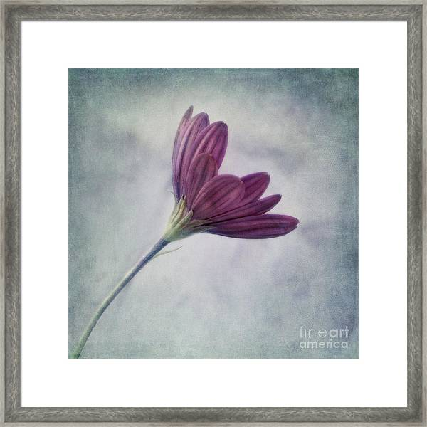 Looking For You Framed Print