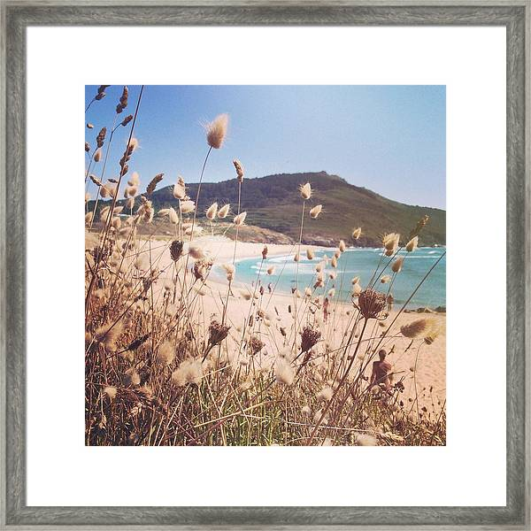 Looking Through Dry Grass Towards Framed Print