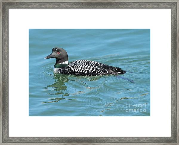 Loon Framed Print