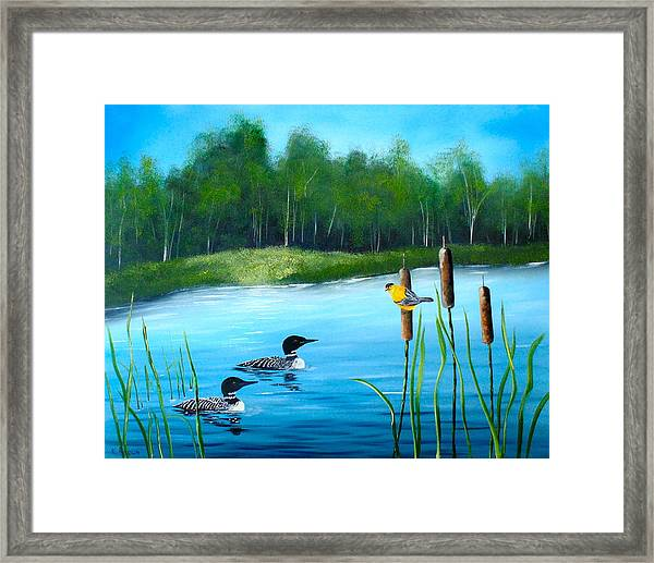 Loons In A Lake Framed Print