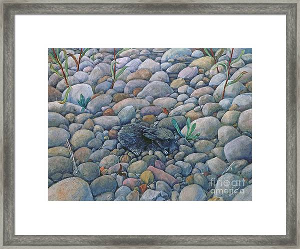 Lost And Found Rabbit Framed Print
