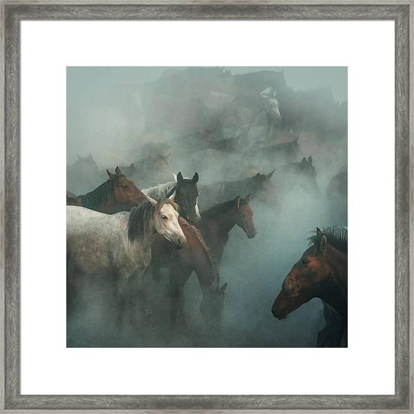 Lost Horses Framed Print