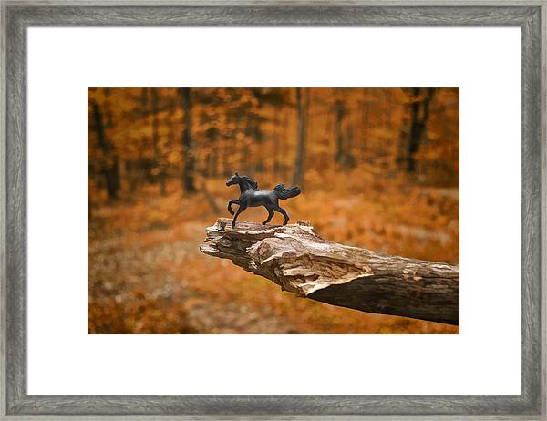 Lost Toy In The Woods Framed Print