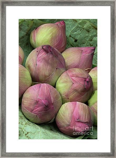 Lotus Buds Framed Print