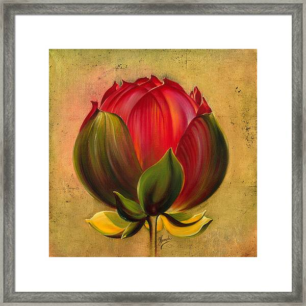 Lotus Bulb Framed Print