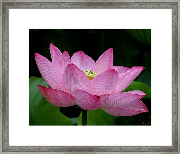 Lotus-center Of Being IIi Dl033 Framed Print