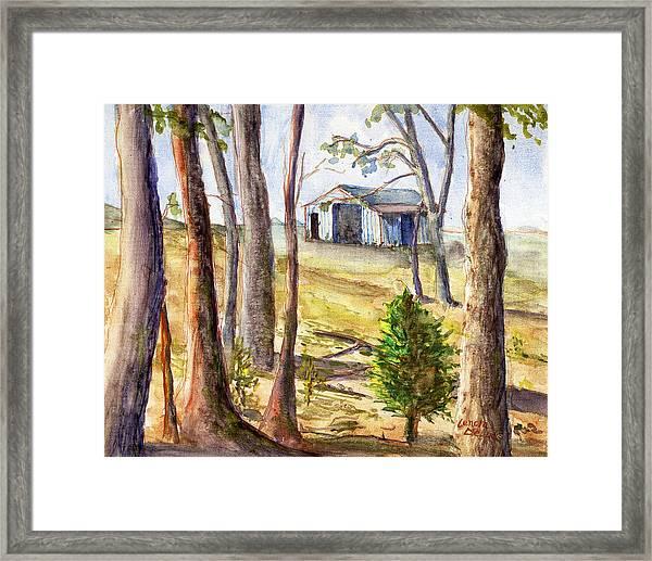 Louisiana Barn Through The Trees Framed Print