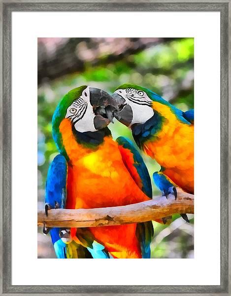 Love Bites - Parrots In Silver Springs Framed Print