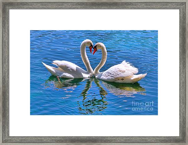 Love For Lauren On Lake Eola By Diana Sainz Framed Print