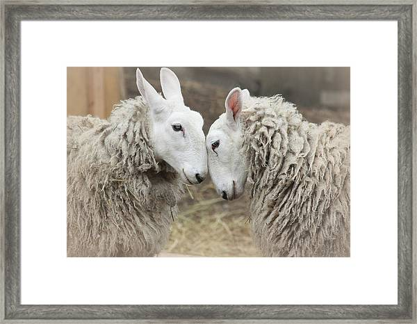 Love Me Sweet Framed Print