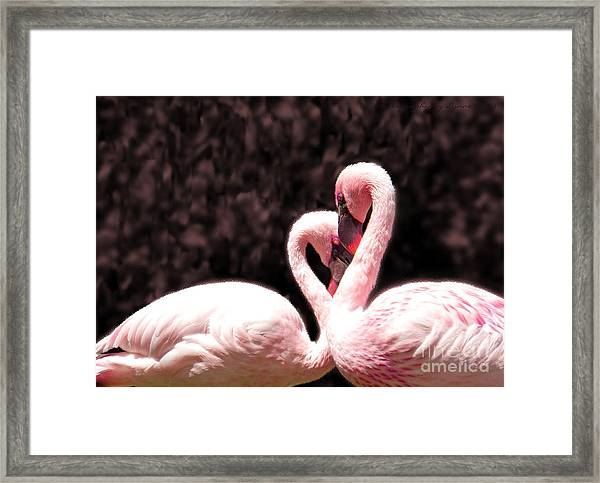 Love Of The Flamingos Framed Print