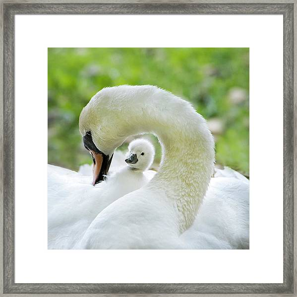 Love Surrounds Framed Print