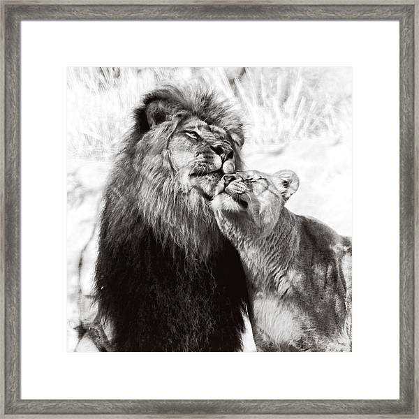 Love Ya You Big Lug Framed Print