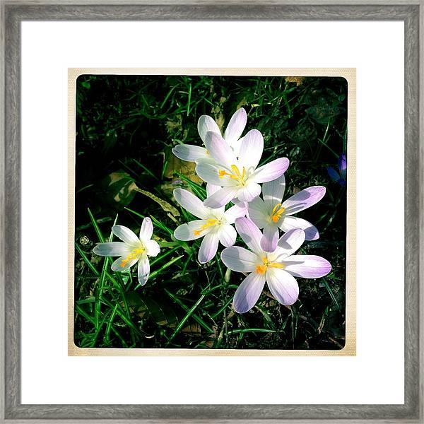 Lovely Flowers In Spring Framed Print
