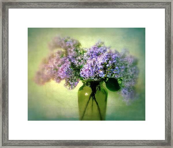 Lovely Lilac  Framed Print