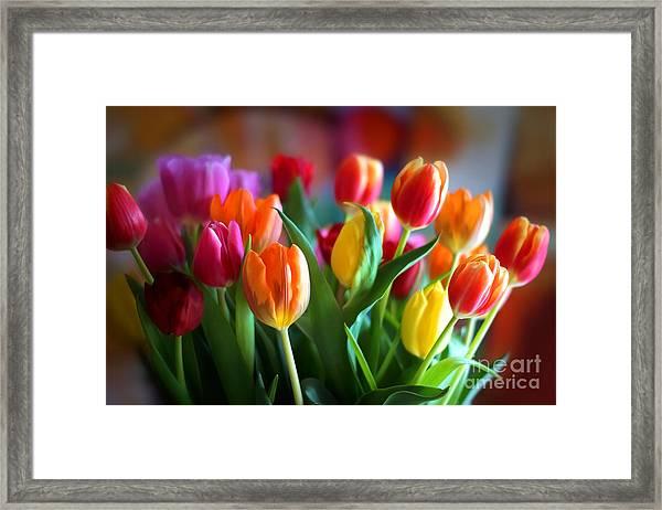 Lovely Tulips Framed Print