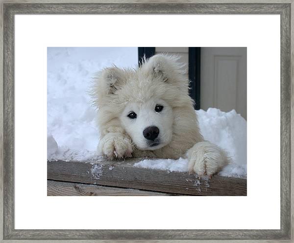 Loving The Snow Framed Print