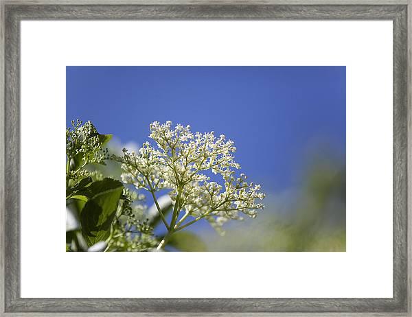 Low Angle View Of Flower Tree Framed Print by Paulien Tabak / EyeEm