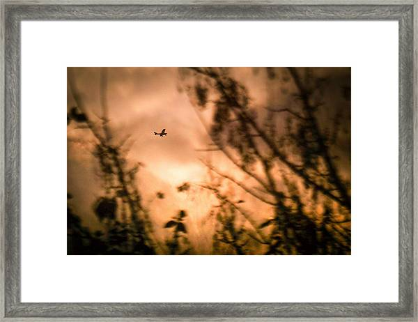 Low Angle View Of Silhouette Airplane And Trees Against Sky During Sunset Framed Print by Andres Ruffo / EyeEm