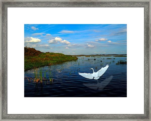 Low Flying Bird Framed Print by Fred Leavitt