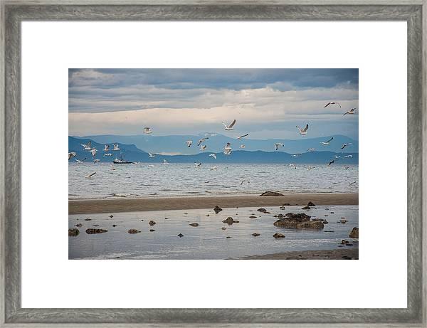 Herring Season  Framed Print