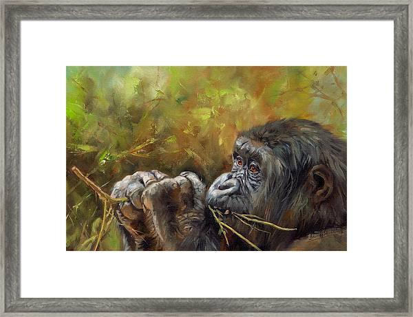 Lowland Gorilla 2 Framed Print