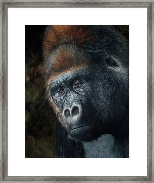 Lowland Gorilla Painting Framed Print