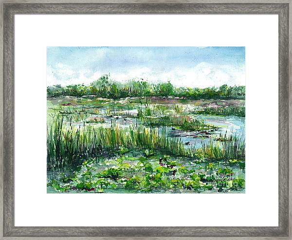 Loxahatchee Marsh Framed Print