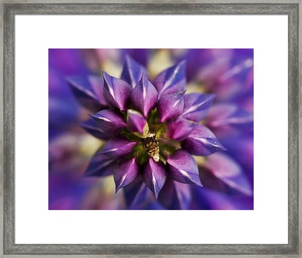 Lupine Kaleidoscope Framed Print