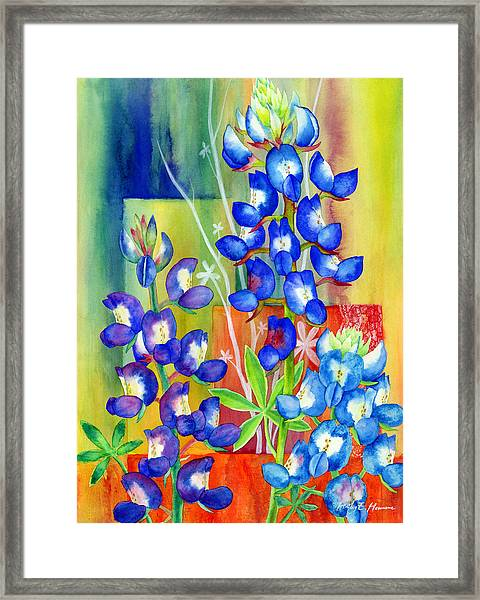 Lupinus Texensis Framed Print