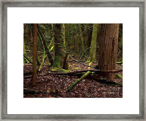 Lush Green Forest Framed Print