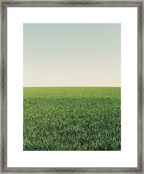 Lush Green Wheat Crop Growing In A Framed Print