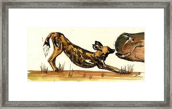 Lycaon With Hippo Framed Print